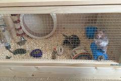 Hamster-enjoying-his-new-home