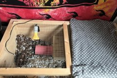 Pygmy-Hedgehog-Cage-with-fleecy-blanket-to-keep-her-warm