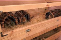 Three-Little-Piggies